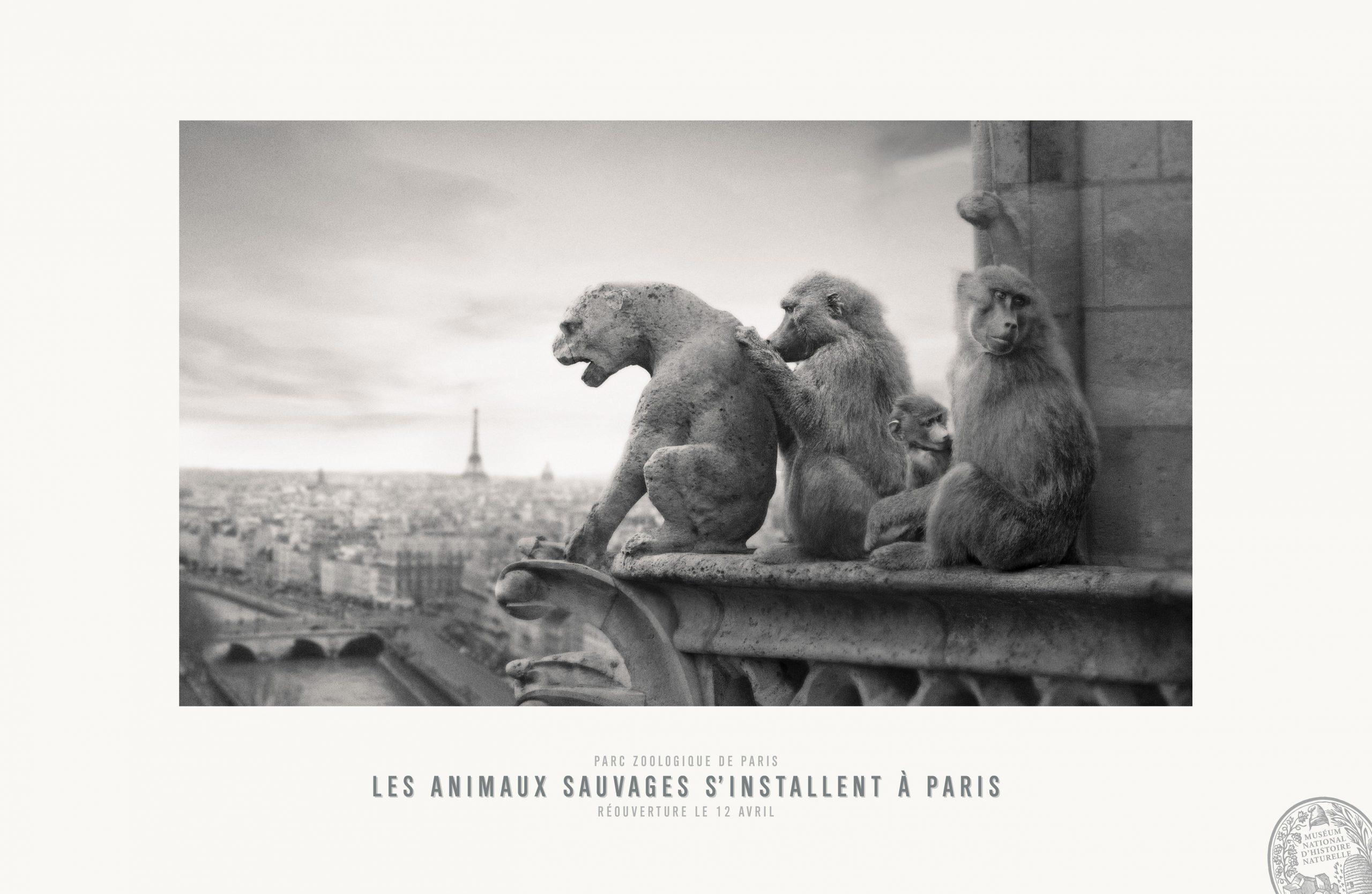 17_2014-311photo-publiciscons-pariszoo-notredam-1551-1024x668