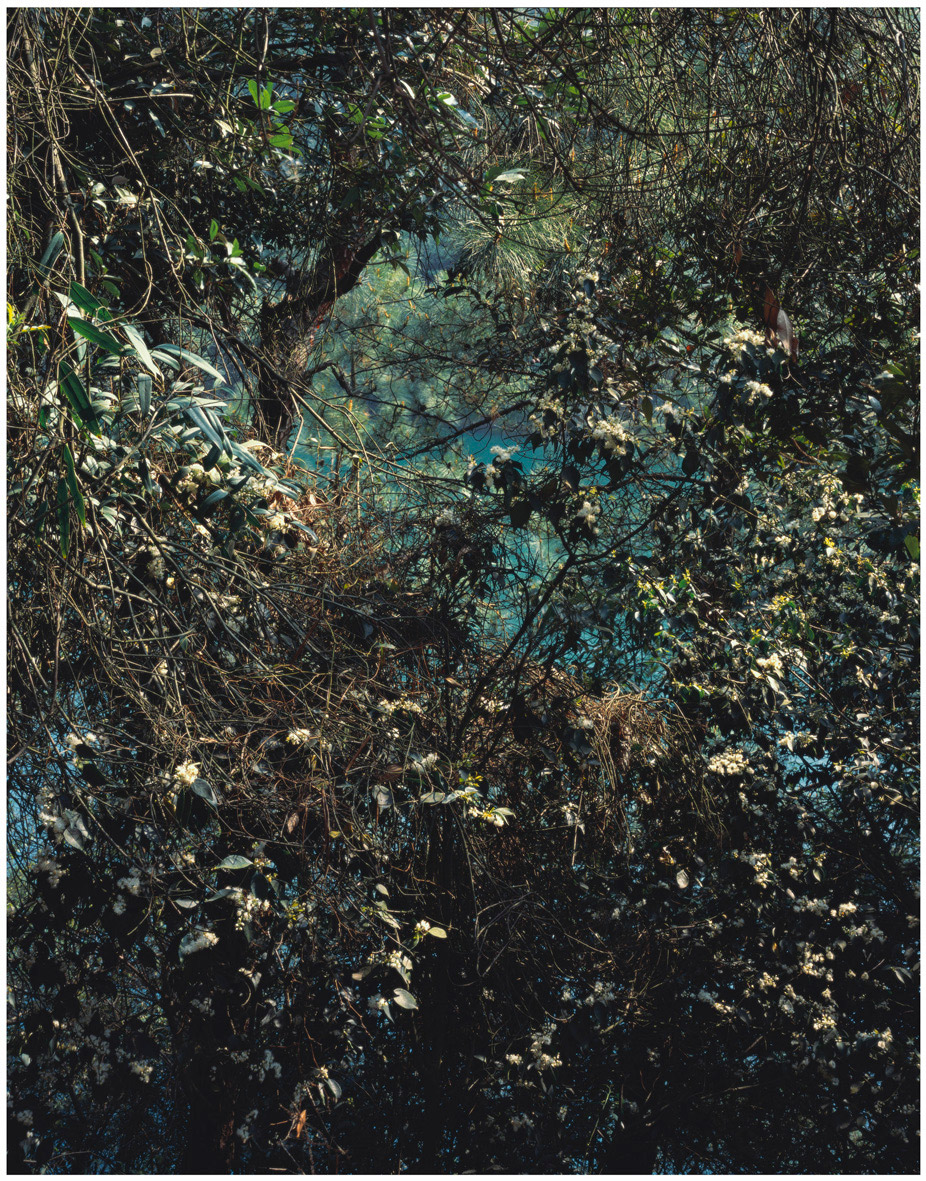 Waking-from-Hibernation-No.3_-_2012__-120cm-x-94cm_-Pigment-Print-on-Fine-Art-Baryta-Paper-_-Shan-Feiming.-Courtesy-of-M97-Gallery-_-Shanghai