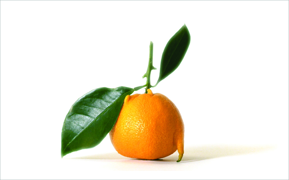 fruits-legumes-moches-intermarches_clementine_06