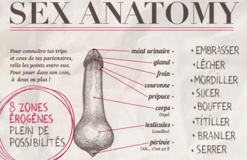 Sex-Anatomy-555x360